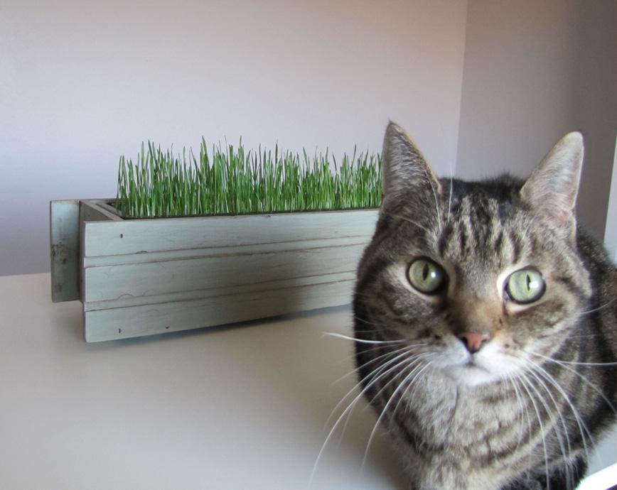DIY Cat Grass